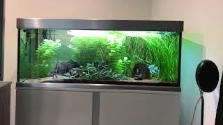 Ab wann können Fische in mein neues Aquarium??