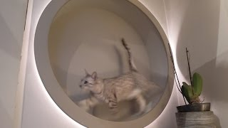 homemade DIY cat wheel