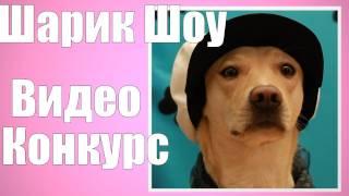 Шарик Шоу - Видео конкурс от Шарика (выпуск 29)(Подписываемся на Шарика вконтакте - http://vkontakte.ru/club12138481 Проект «Открытый Интернет» http://vk.com/openweb Наш сайт..., 2011-11-19T21:40:59.000Z)