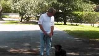 Bow Wow Behavior Buddies, Home Buddies, Camp Bow Wow, Dog Training, Tampa