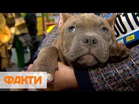 Более 5 тыс. собак 200 пород: в Киеве проходит выставка Киевская Русь