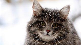 """""""Cat Humor SHOW"""" №1."""
