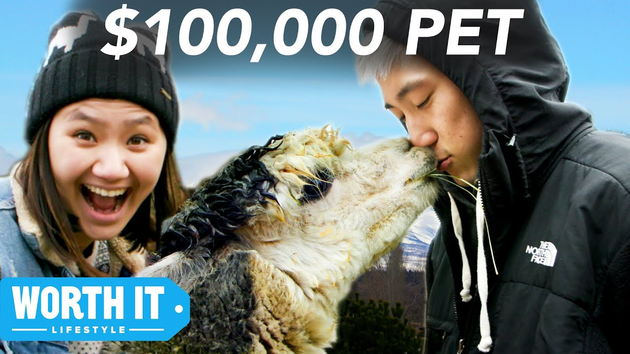 $17 Pet vs. $100,000 Pet image