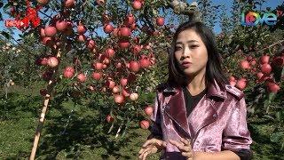 Liêu Hà Trinh phấn khích tột độ khi tham quan vườn táo tại Aomori Nhật Bản 😋