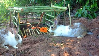 Amazing Quick Rabbit Trap Using Bamboo Trap - How To Make Rabbit Trap With Bamboo That Work 100%