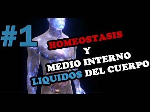 HOMEOSTASIS Y MEDIO INTERNO (Retroalimentación Positiva y Negativa)