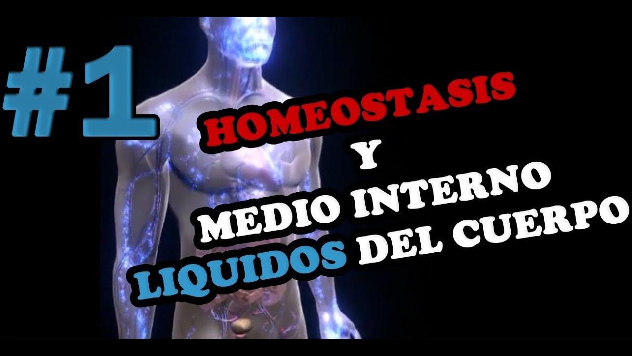 HOMEOSTASIS Y MEDIO INTERNO (Retroalimentación Positiva y Negativa ...