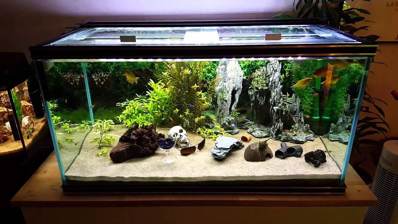 Mina akvarium