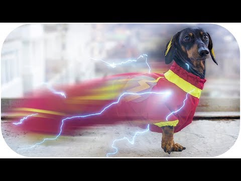 SUPER DOGS use POWERS! Try not to laugh or grin!