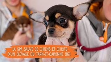 La SPA intervient dans un élevage du Tarn-et-Garonne (82) pour sauver une cinquantaine de chiens.