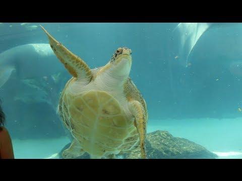 The Aquarium at Mote Marine Laboratory - Sarasota, FL - Aquarium Travel ep.1