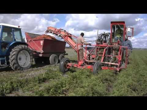 VanSingel Farms:  2015 MI Vegetable Council Master Farmer Award