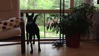 Is Your Dog a Territorial Barker? This Training Can Help