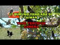Nama Nama Burung  Mp3 - Mp4 Download