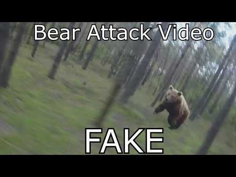 Bear Attack, Man is trying to run away from attacking Bear: GoPro - WHY IT IS FAKE!