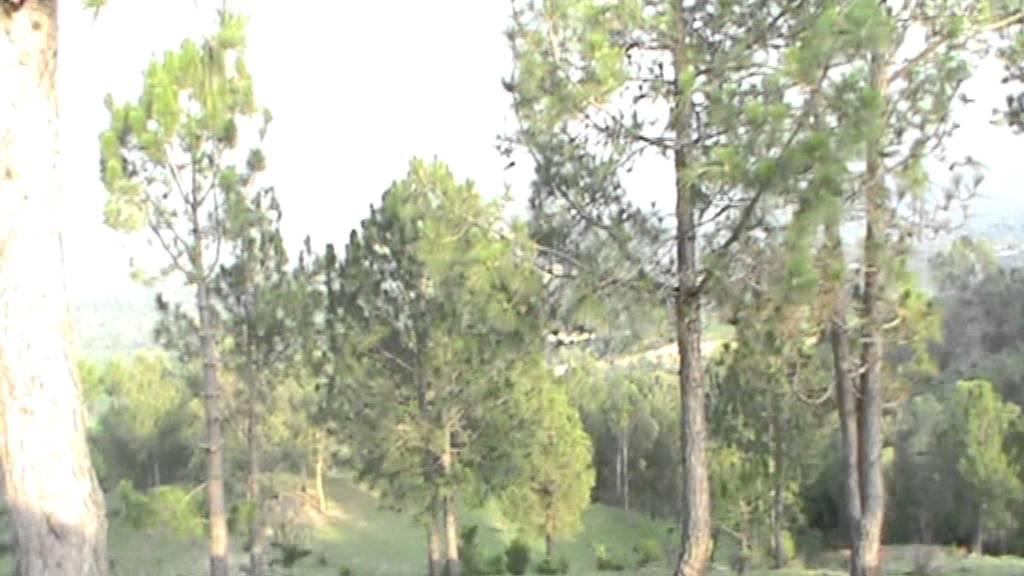 View Of Abbottabad And Mansehra From Banda Nabi Khan Hazara
