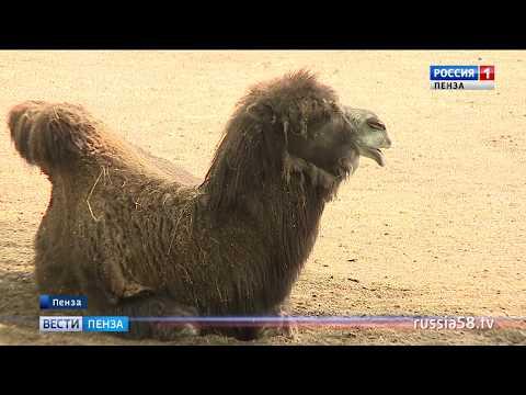 Аномальная жара в Пензе: чем это грозит людям, животным и растениям