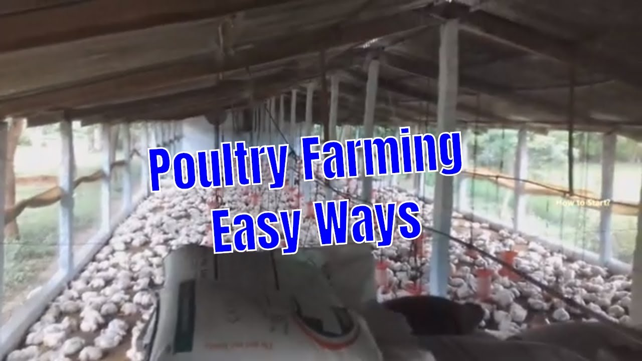 Broiler Poultry Farming Method with Project Report // Poultry Farming Easy  Ways