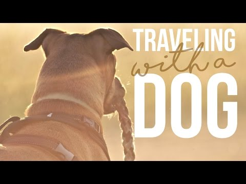 Traveling With A Dog - Q&A - Fulltime RVing - A Drivin' & Vibin' Travel Vlog