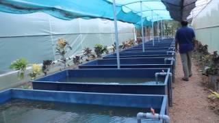 A Video Tour of The Still Water Aquatic's Aquatic Plant Farm
