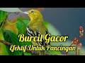 Audio Terapi Sirtu Cepat Gacor Terbaik  Mp3 - Mp4 Download