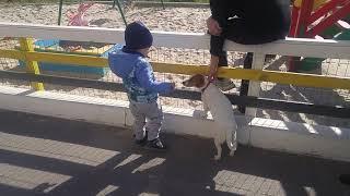 Влад гладить собаку