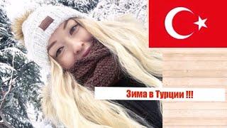 зима в ТУРЦИИ / снег МНОГО снега АНКАРА / Чайка над БОСФОРОМ / кошки и коты