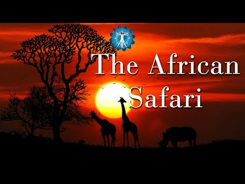 8 Hours Relaxation Music: African Safari  Background Audio Accompaniment with Positive Vibration