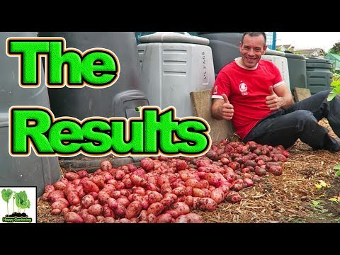 The Results Of The Potatoes Grown In the Ground Or Container Experiment