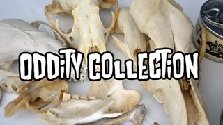 Oddity Collection | Animal Bones+Critters In Jars