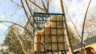 tutorial homemade suet for all types of birds
