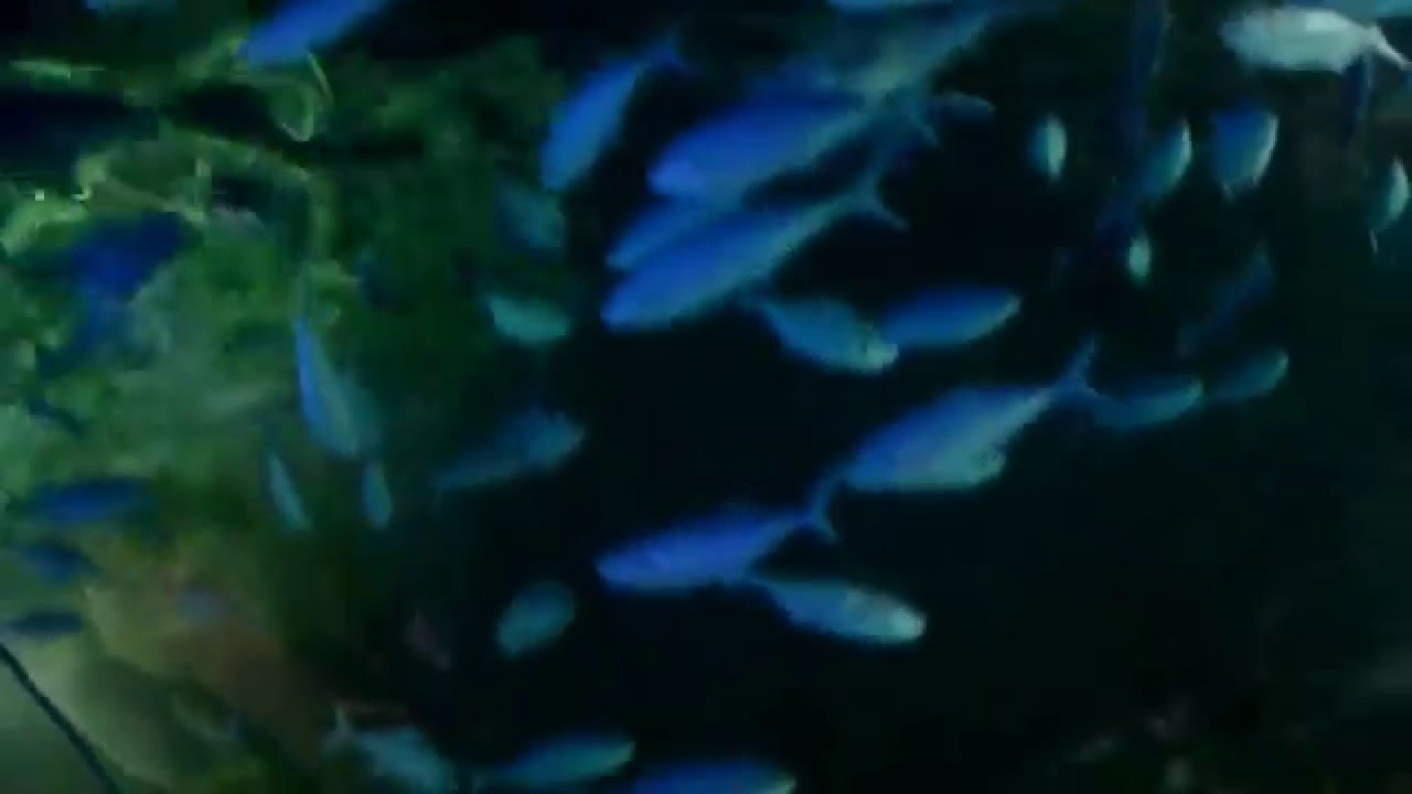 The Kelly Tarltons Sea Life Aquarium New Zealand. - YouTube