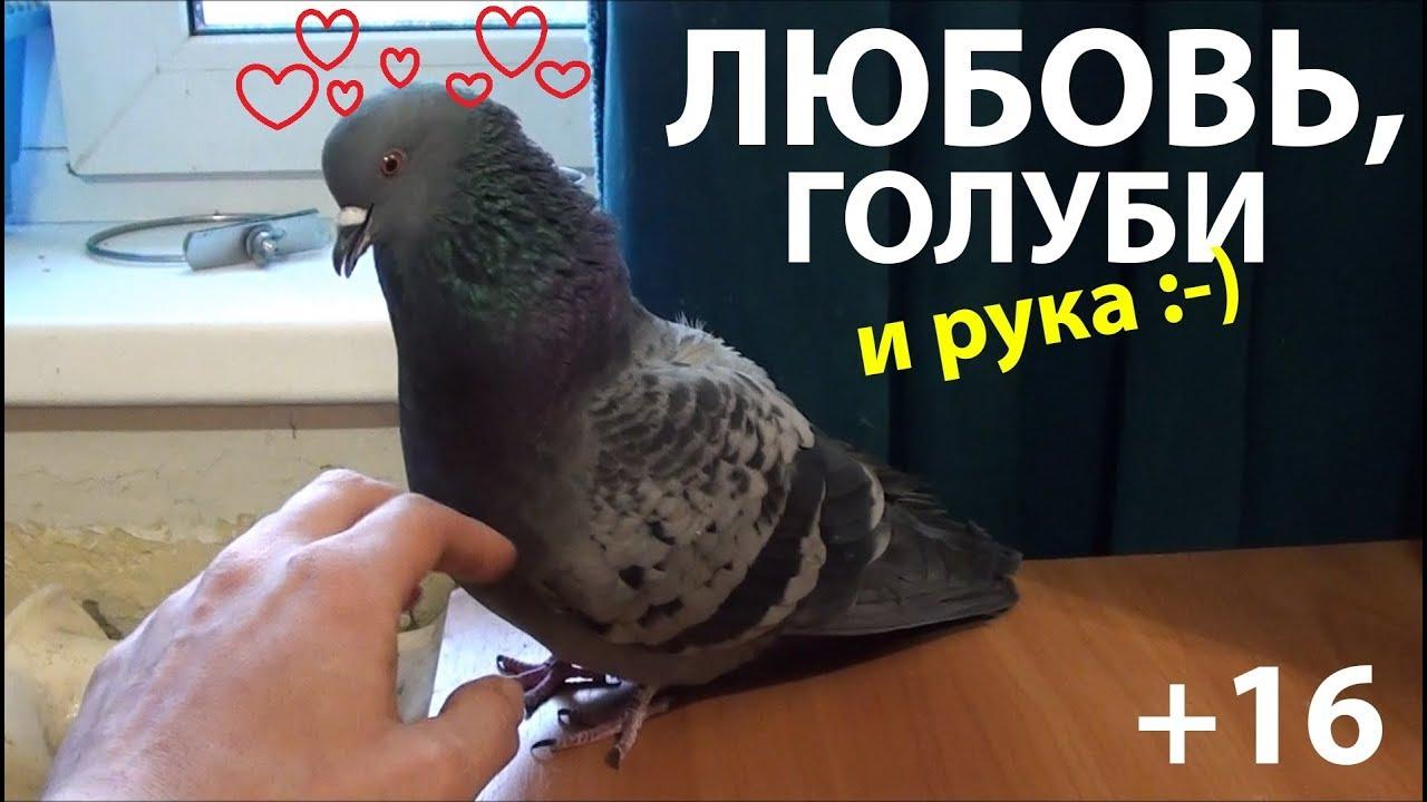 Любовь, голуби и рука (+16) - YouTube