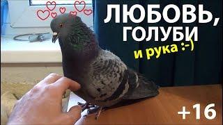Любовь, голуби и рука (+16)