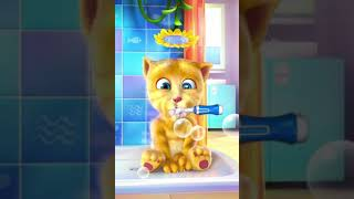 Funny cat brushes teeth for children