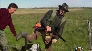 Охота с английским сеттером