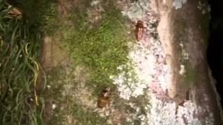 大小の蝉の幼虫が2匹、競い合って木を登っていく。