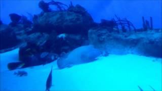 Москвариум. ПОДВОДНЫЙ МИР ОКЕАНА. АКУЛЫ, МУРЕНЫ И БОЛЬШИЕ РЫБЫ, sea world (забавные животные)