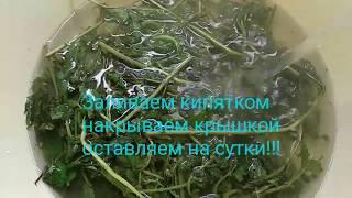 сИРОП ИЗ МЯТЫ/// КРУГЛЫЙ ГОД ВКУСНЯХИ!!!
