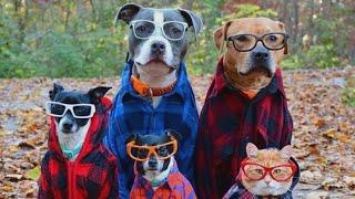 Ох уж эти кошки!🐈 Подборка приколов с котами для хорошего настроения!