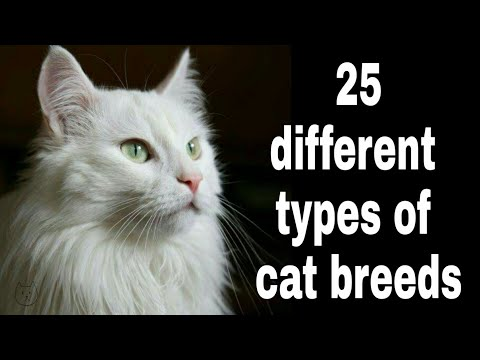 25 different types of cat breeds