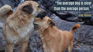 The average dog is nicer than the average person