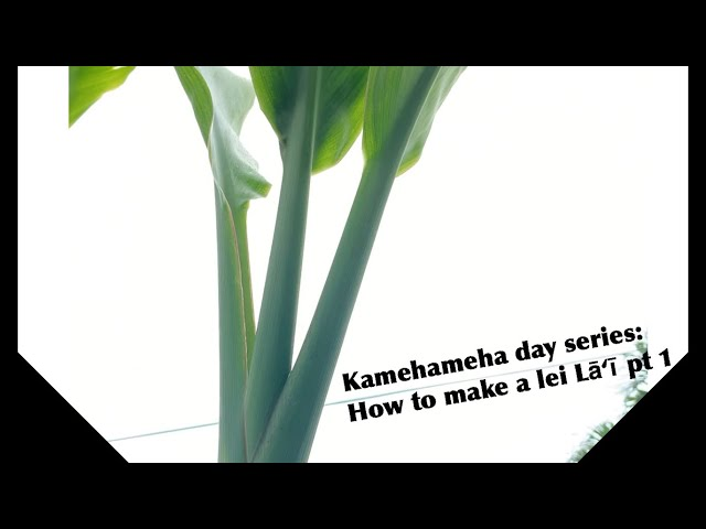 Kamehameha Day series: How to make lei Lāʻī pt. 1