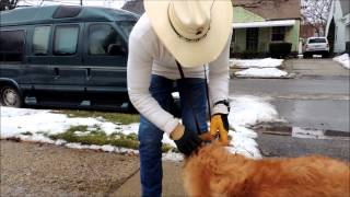 How To Put On A Halti, Gentle Leader, Safecalm, Or Canny Dog Training Collar - Big Chuck Mcbride