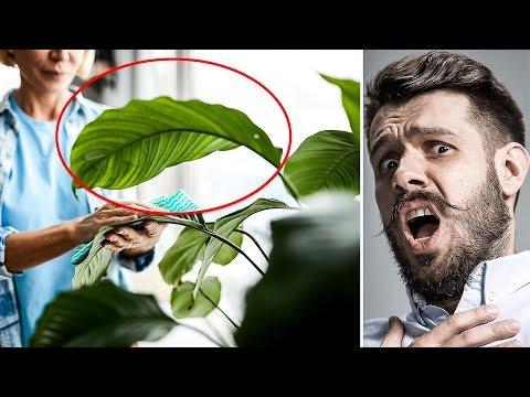 Вопрос: Как очистить воздух с помощью растений?