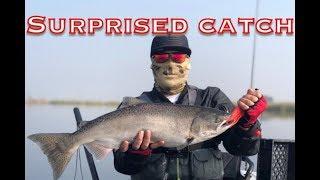 Catch n' cook striper CA Delta bass fishing