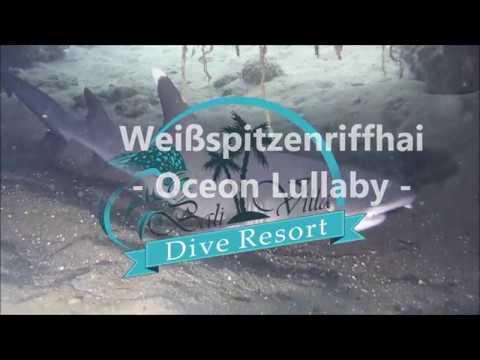 Bali Villa Dive Resort - Weißspitzenriffhai