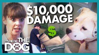 Secret Second Set of Furniture Used to Hide Dog's $10k Damage | It's Me or the Dog
