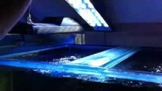 Cool Aquarium Hood With Led Lights By Paul Talbot