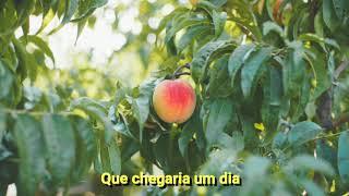 send me a peach (legendado) | over the garden wall